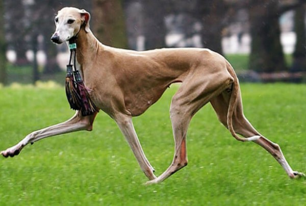 Top 9 Most Popular Dog Breeds and Their Complete Information